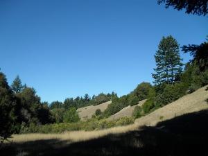 Stevens Creek, Silicon Valley, Californie