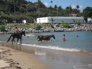 Rio Recife Salvador 107