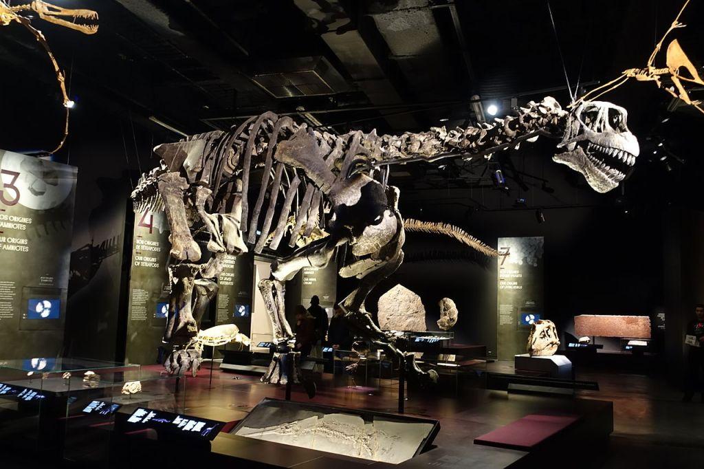 Camarasaurus, photo Wikipedia
