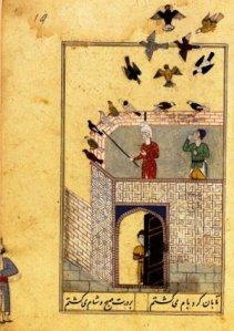 pigeons islam